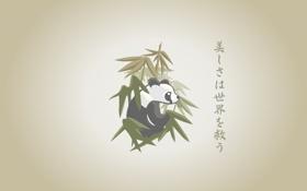 Обои рисованая, panda, бабук