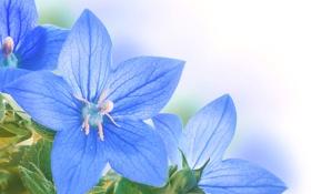 Обои цветы, листики, голубые цветочки