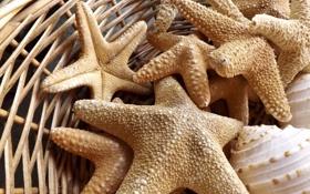 Картинка звезда, корзинка, морская