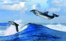 Картинка брызги, облака, горизонт, дельфины, волна, море