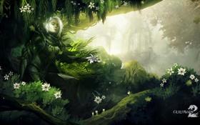 Обои лес, фентези, игра, Guild Wars 2