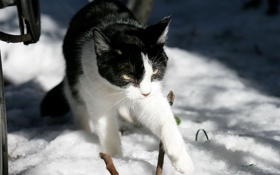 Обои зима, солнце, снег, ч/б кошка