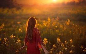 Обои поле, девушка, солнечный свет, навстречу солнцу