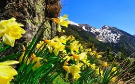 Обои небо, цветы, горы, природа