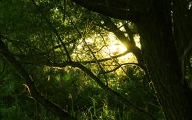 Картинка паутинка, солнце, Лес