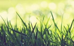 Картинка Макро, зелёная, трава