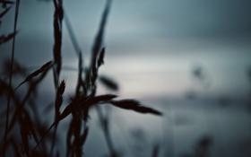 Обои растения, природа, макро, фото
