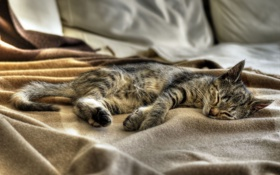 Обои кошка, кот, котенок, сон, спит, Kitten, Sleeping