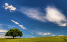 Обои дорога, пшеница, поле, следы, природа, путь, пейзажи