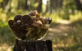 Обои стекло, вода, капли, фон, дождь, обои, грибы
