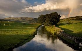 Картинка пейзаж, трава, небо, лето, деревья, природа, растения