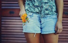 Обои девушка, цветы, шорты