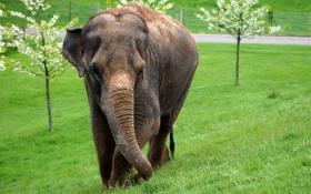 Обои трава, млекопитающее, деревья, слон, цвет, размытость