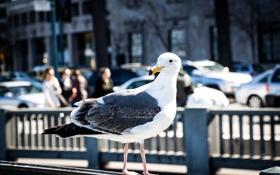 Картинка город, птица, улица, чайка, ограда