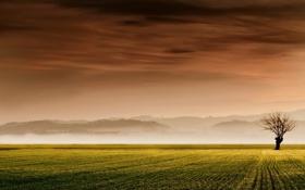 Картинка поле, пейзаж, закат, дерево