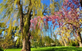 Обои весна, цветение, скамья, сад, деревья, ива, парк