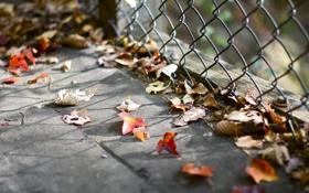 Картинка листья, ограждение, опавшие, осенние