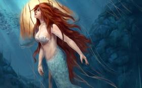 Обои русалка, медуза, подводный мир, mermaid