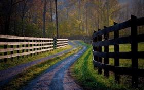 Обои дорога, трава, деревья, природа, фото, дерево, дороги