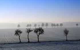Картинка пейзаж, поле, деревья, утро