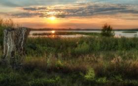Картинка трава, солнце, закат, озеро, пень, вечер
