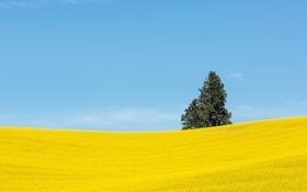 Обои поле, небо, цветы, дерево, холмы, Вашингтон, США