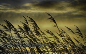 Картинка солнце, облака, стебли, трава, куст