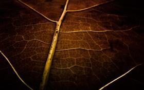 Картинка обои, фото, картинка, сухой, растение, лист, макро