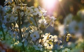 Картинка поле, лето, солнце, макро, свет, цветы, природа