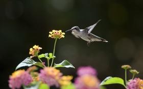 Обои цветы, нектар, птица, колибри, солнечно