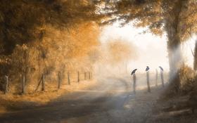 Картинка дорога, лес, солнце, забор, день, три, ворона