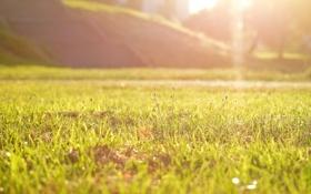 Обои зелень, трава, макро, лучи, свет, парк, Солнце