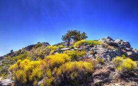 Картинка камни, кусты, небо, скалы, дерево, гора