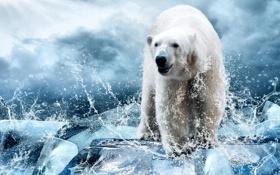 Картинка небо, облака, брызги, лёд, белый медведь, полярный