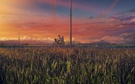 Обои пшеница, поле, небо, облака, велосипед, рассвет, яркое