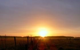 Обои поле, животные, небо, трава, солнце, деревья, природа