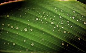 Обои капли, лист, after rain