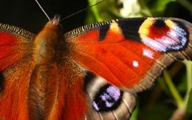 Обои узор, бабочка, крылья, насекомое