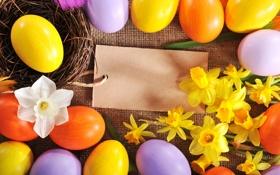Картинка цветы, яйца, Пасха, flowers, нарциссы, spring, Easter