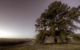 Картинка поле, дом, утро, туман