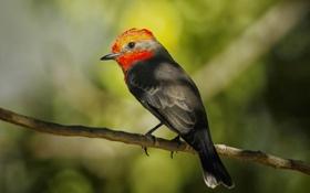 Обои птица, цвет, ветка, перья, клюв, хвост