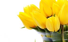 Картинка желтые, тюльпаны, белый фон, ваза