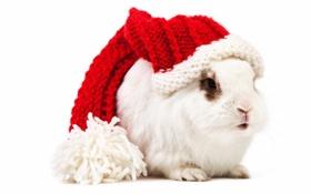 Картинка белый, кролик, колпак