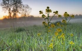 Обои трава, цветы, туман, роса, рассвет, утро, паутинка