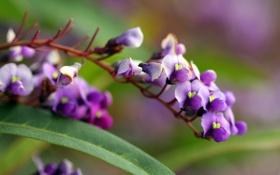 Обои цветы, ветка, фиолет