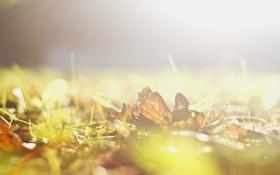 Обои осень, день, ярко, солнышко, лучисто