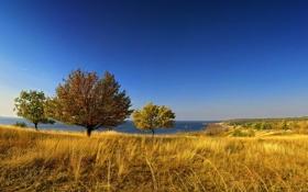 Картинка пейзаж, поле, небо, деревья