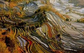 Обои Yunnan, вид сверху, плантации, поля, Китай