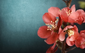 Обои background, twigs, фон, веточка, flowers, цветы