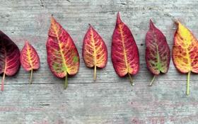 Обои листья, дерево, осенние